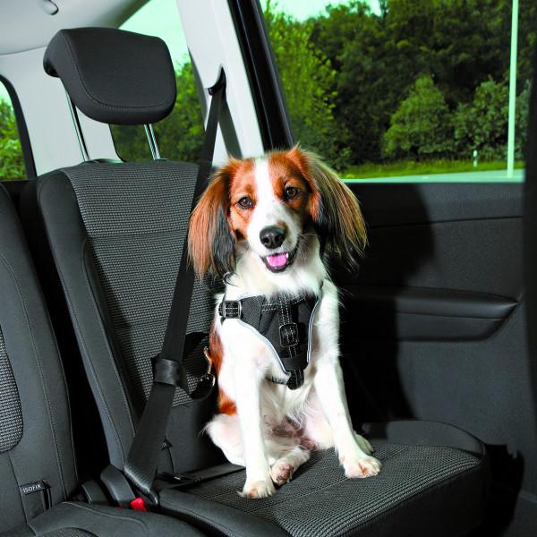 Auto-Geschirr Dog Comfort