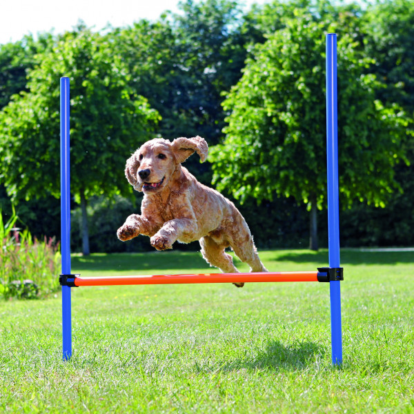Dog Activity Agility Hürde, Kunststoff, 123 × 115 cm, ø 3 cm, blau/orange