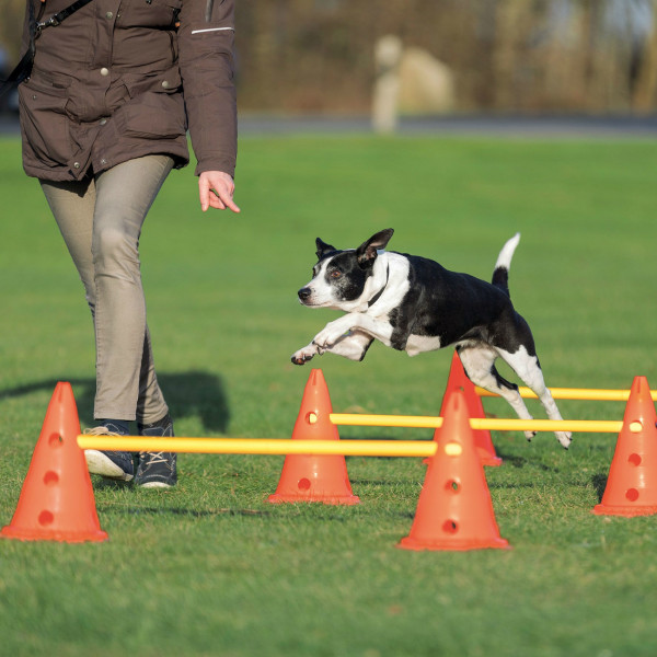 Dog Activity Hindernisse, 3 St., ø 23 × 30 cm, 78 cm, orange/gelb